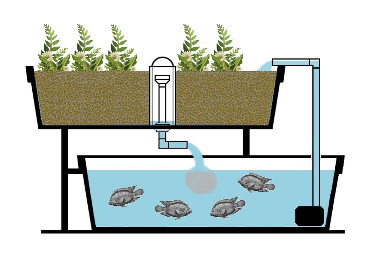 Aquaponics gardening aquaponic gardening the advantages for Decor systems