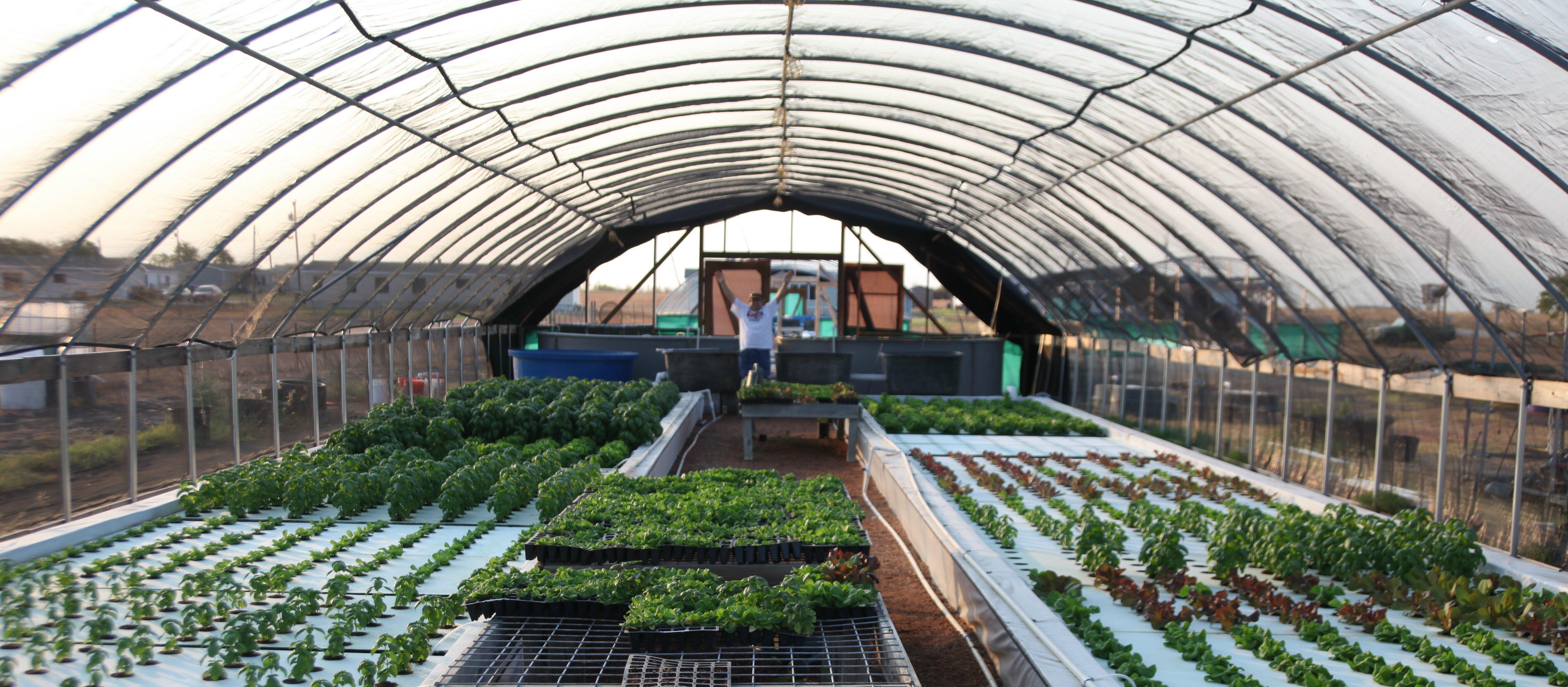 Starting Tilapia Fish Farm – Sample Business Plan Template