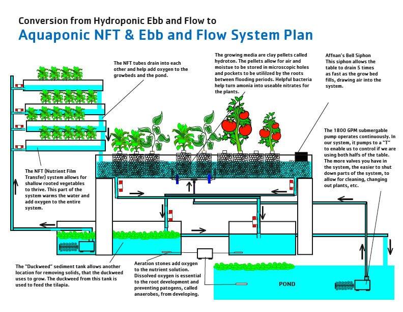 ... Diy Plans : Aquaponics – How To Build An Aquaponics System