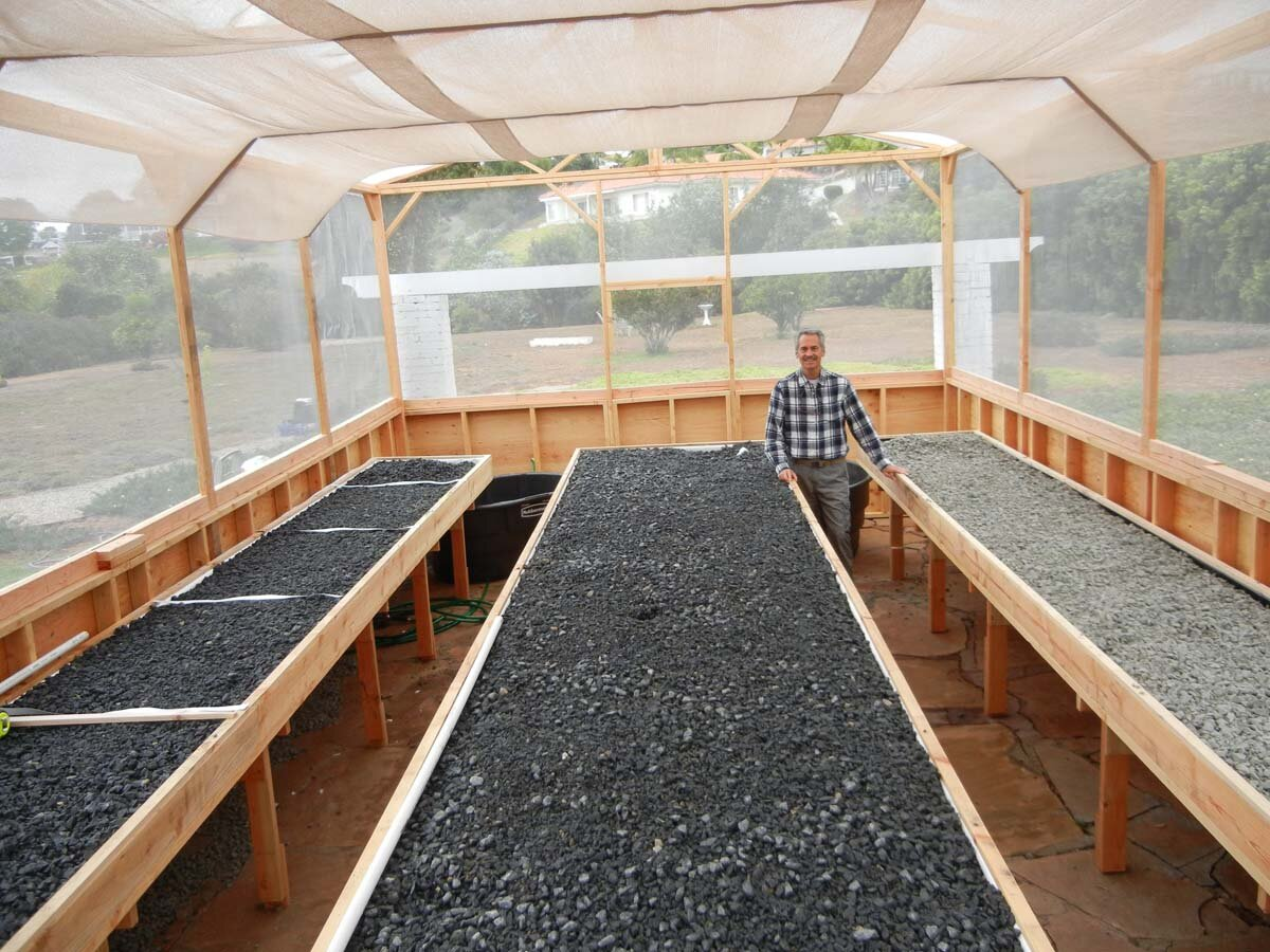 Build aquaponic system my diy aquaponics system for Aquaponics fish for sale