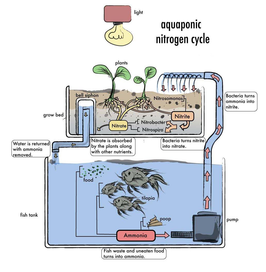 Diy Aquaponics Plans : What Is Aquaponic System