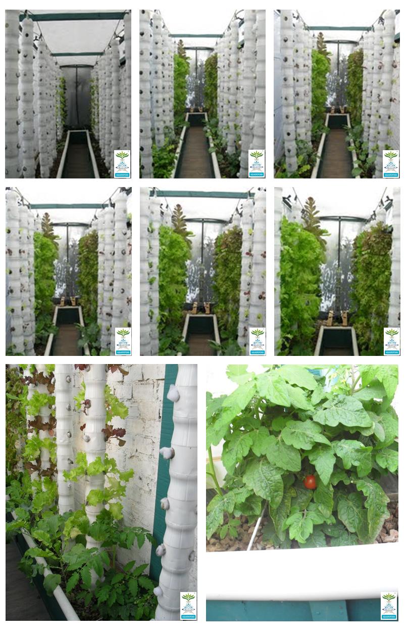 Vertical Aquaponics : City-dwelling Vegetable Farming ...