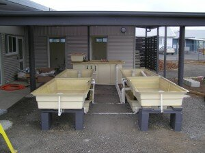 aquaponics-tasmania