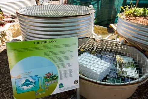 commercial aquaponics tasmania waters sistem