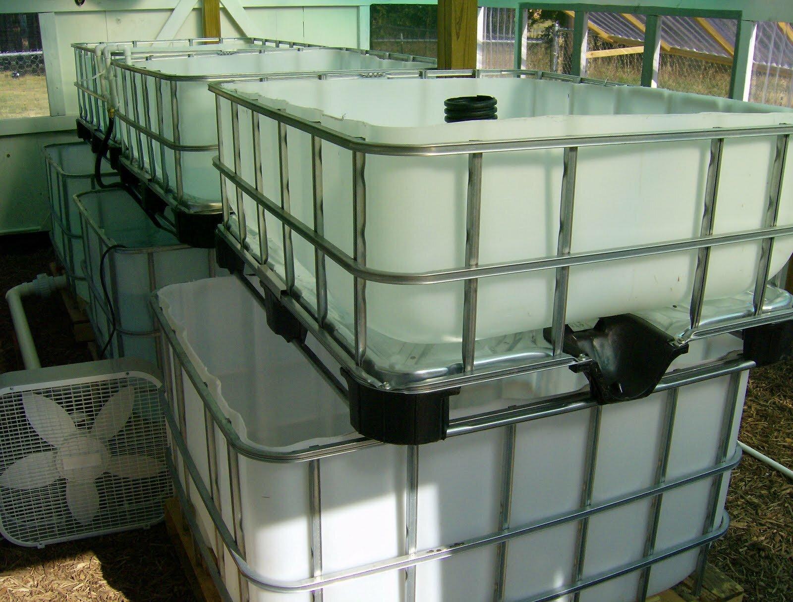 Bl system how many fish in a 55 aquaponics tank info - Ibc Tote Aquaponics